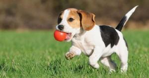 256_puppybegeleiding-550