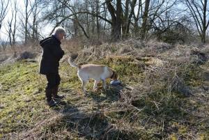 """De labrador vindt de dummy tijdens de workshop """"kennis maken met jachttraining"""""""